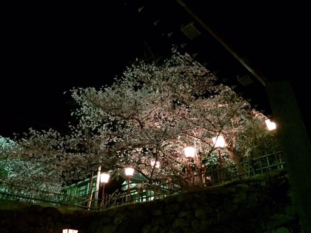 お城まつり・・・夜桜編_a0326106_2111257.jpg