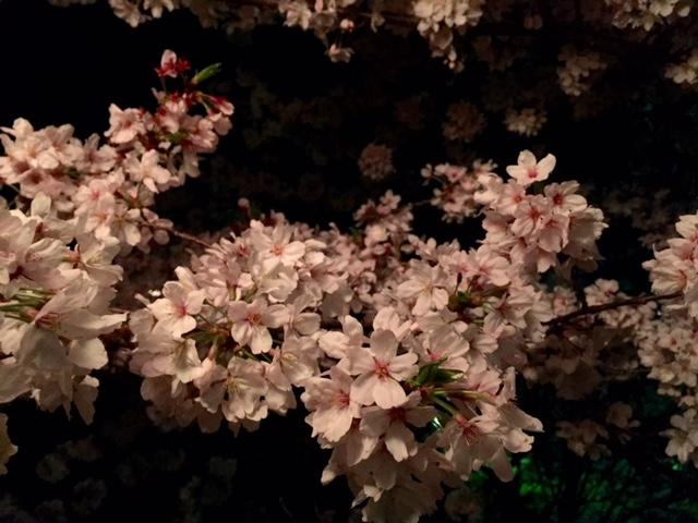 お城まつり・・・夜桜編_a0326106_2111777.jpg