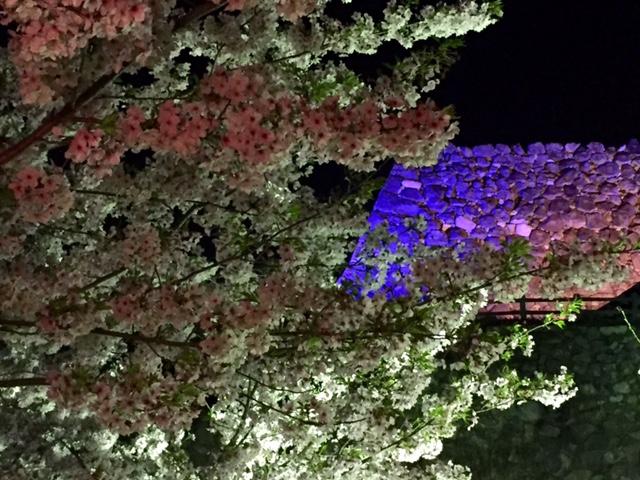 お城まつり・・・夜桜編_a0326106_2112379.jpg