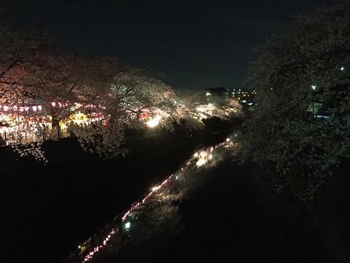 桜満開( *´艸`)_c0294909_1856569.jpg