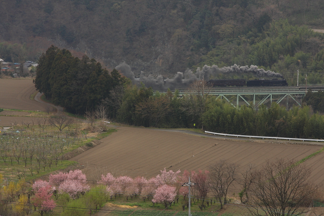 利根川上流の春 - 2016年春・上越線 -    _b0190710_2238436.jpg