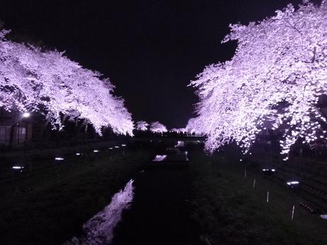 ライトアップ_e0215910_13234949.jpg