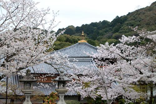 16花だより35 清水寺_e0048413_17241995.jpg