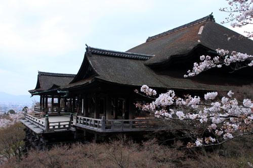 16花だより35 清水寺_e0048413_1724526.jpg