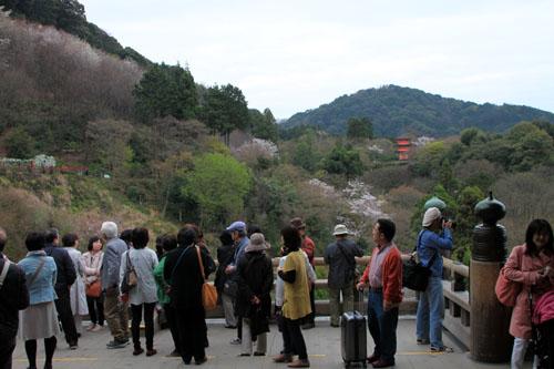 16花だより35 清水寺_e0048413_17251266.jpg
