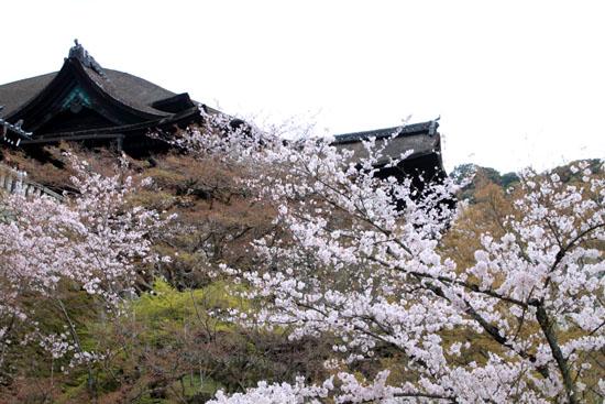 16花だより35 清水寺_e0048413_17254059.jpg
