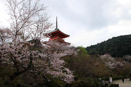 16花だより35 清水寺_e0048413_17255313.jpg