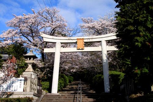 16桜だより36 宗忠神社など_e0048413_2065041.jpg
