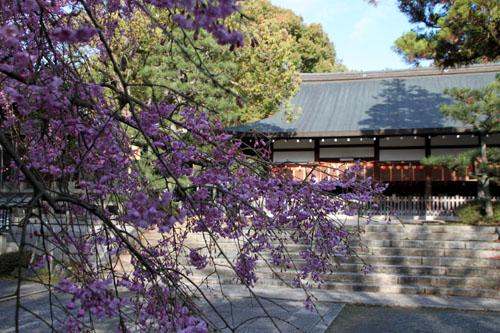 16桜だより36 宗忠神社など_e0048413_2071753.jpg