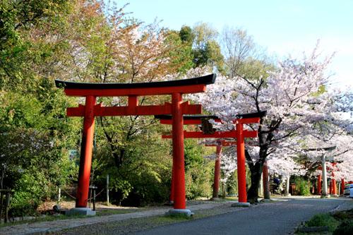 16桜だより36 宗忠神社など_e0048413_2072925.jpg