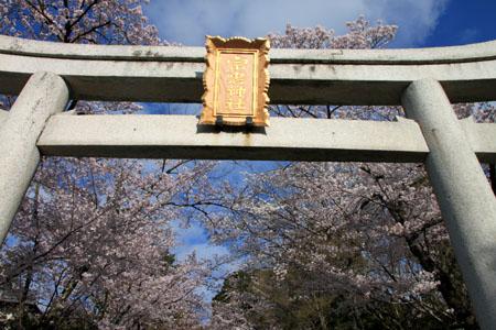 16桜だより36 宗忠神社など_e0048413_207348.jpg