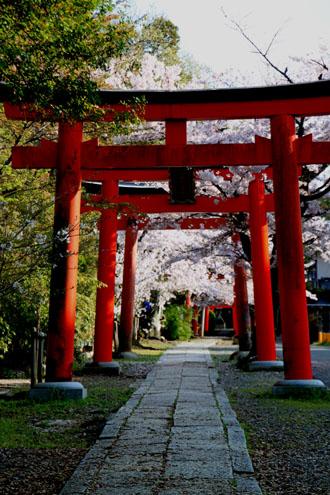 16桜だより36 宗忠神社など_e0048413_2073831.jpg