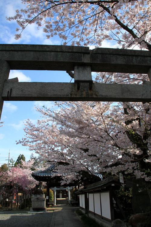 16桜だより36 宗忠神社など_e0048413_2074930.jpg