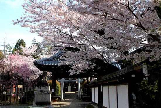 16桜だより36 宗忠神社など_e0048413_2075840.jpg