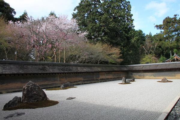 16 桜だより38 龍安寺_e0048413_21235248.jpg