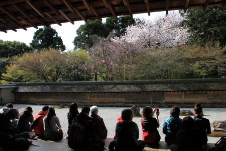 16 桜だより38 龍安寺_e0048413_21243291.jpg