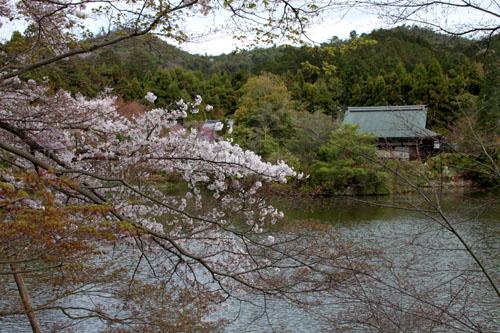16 桜だより38 龍安寺_e0048413_21251139.jpg