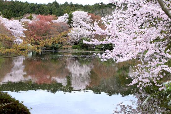 16 桜だより38 龍安寺_e0048413_21252634.jpg