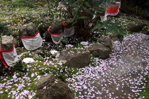 16 桜だより38 龍安寺_e0048413_21255194.jpg