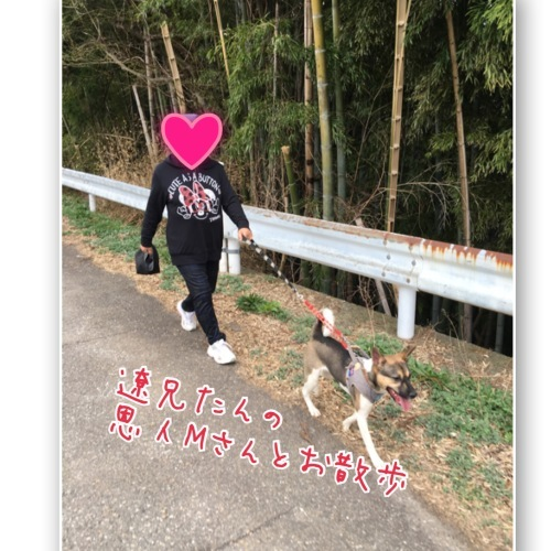 ちくわの呟き ~ボクってナニ犬?~_b0207320_11450047.jpeg