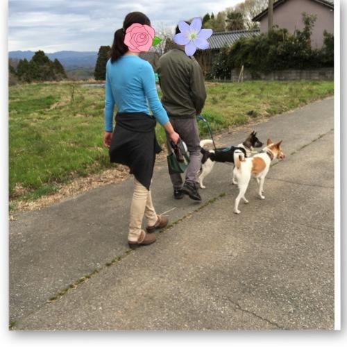 ちくわの呟き ~ボクってナニ犬?~_b0207320_11451893.jpeg