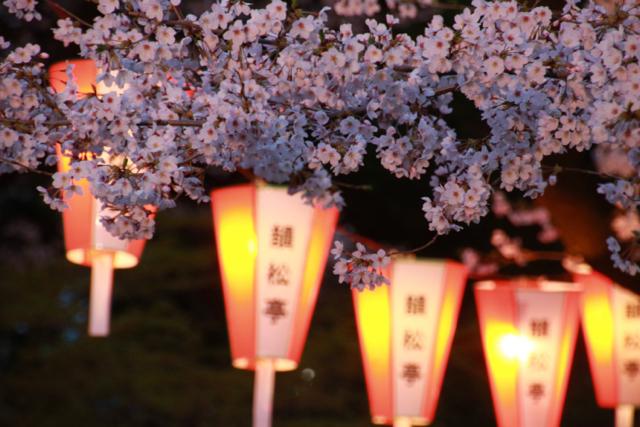 【上野恩賜公園】お花見遠足 part 4_f0348831_18023762.jpg