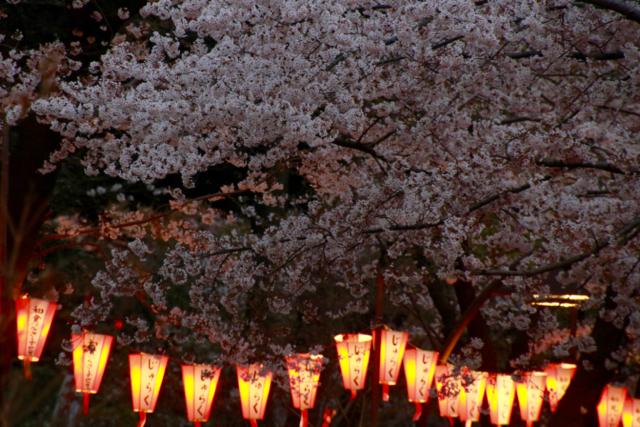 【上野恩賜公園】お花見遠足 part 4_f0348831_18024533.jpg