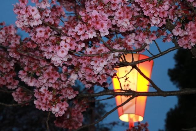 【上野恩賜公園】お花見遠足 part 4_f0348831_18024575.jpg