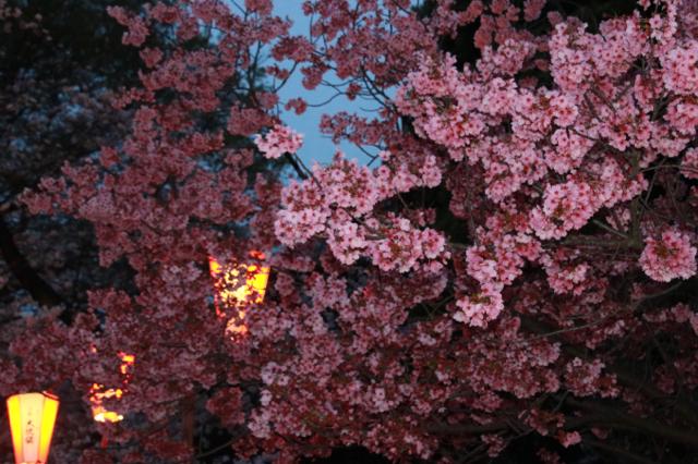 【上野恩賜公園】お花見遠足 part 4_f0348831_18024591.jpg