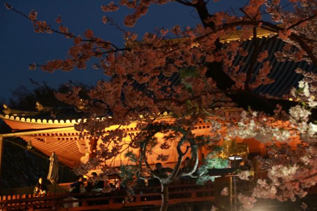 【上野恩賜公園】お花見遠足 part 4_f0348831_18024605.jpg
