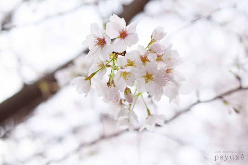 春の花_e0131432_15095233.jpg
