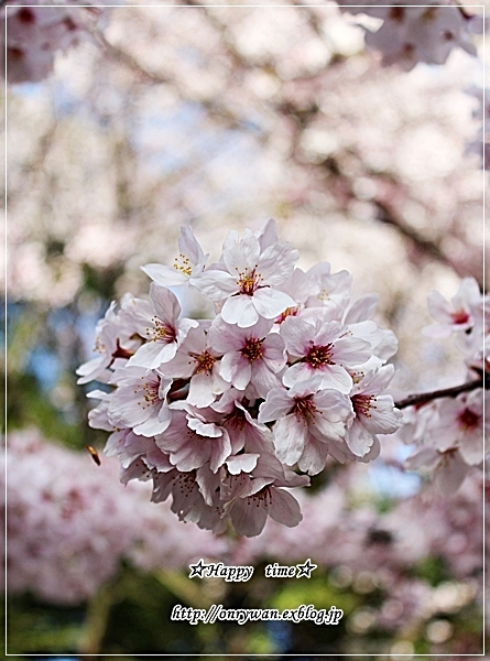 お赤飯弁当と地元の桜♪_f0348032_18240114.jpg