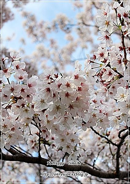 お赤飯弁当と地元の桜♪_f0348032_18241482.jpg