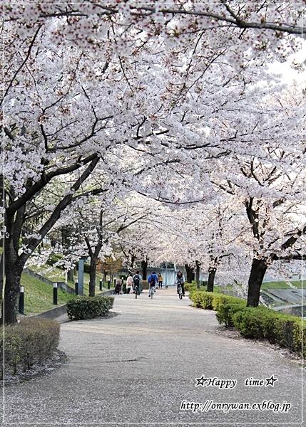 お赤飯弁当と地元の桜♪_f0348032_18242673.jpg