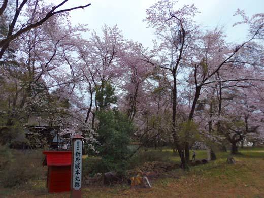 神代桜_d0127634_16234135.jpg