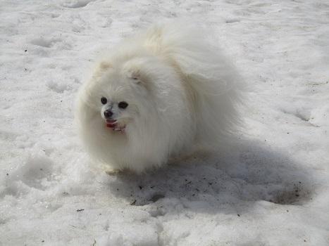 雪と桜_b0177436_1424645.jpg