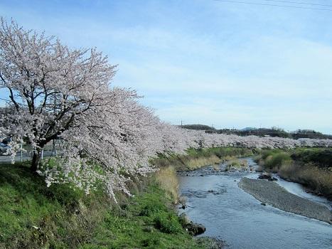 雪と桜_b0177436_1428209.jpg