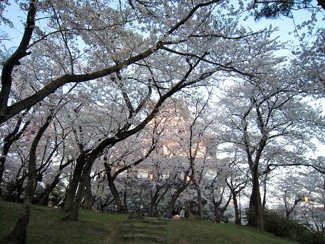 雪と桜_b0177436_14342036.jpg