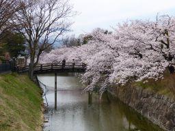 桜満開_c0094442_9225263.jpg