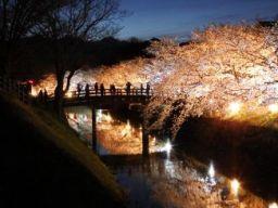 桜満開_c0094442_9252585.jpg