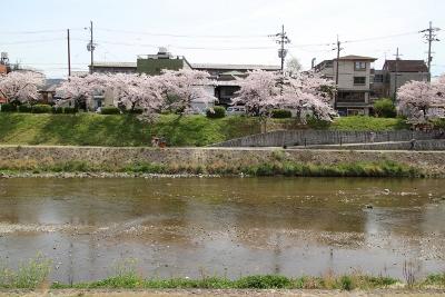 花だより 桜 桜 桜_a0279848_1629794.jpg