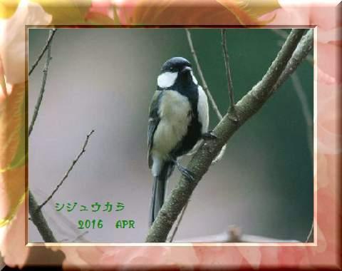 f0345156_15523929.jpg