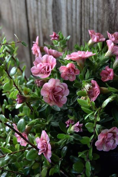 初夏のお庭の準備、少しずつ。。。_a0229658_18134587.jpg