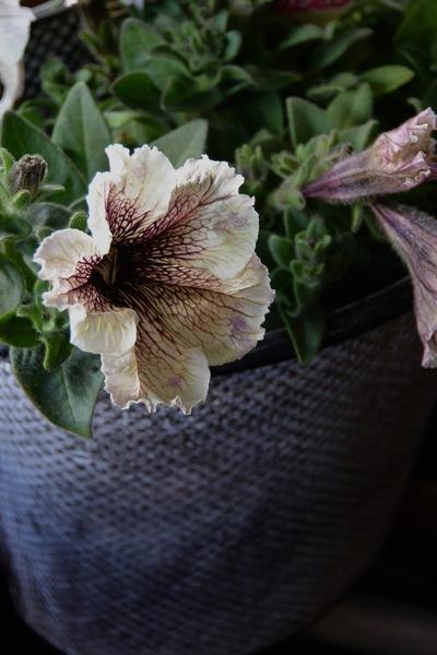 初夏のお庭の準備、少しずつ。。。_a0229658_1833233.jpg