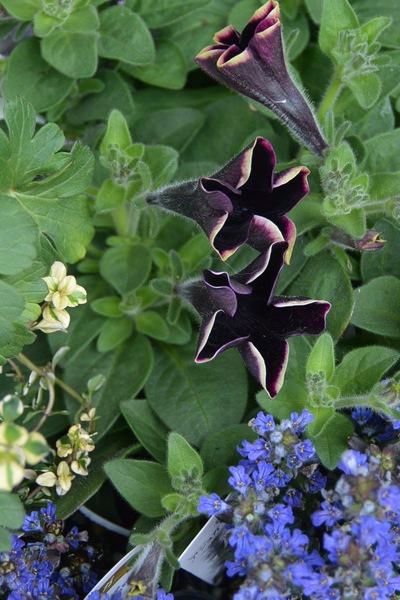 初夏のお庭の準備、少しずつ。。。_a0229658_1862981.jpg