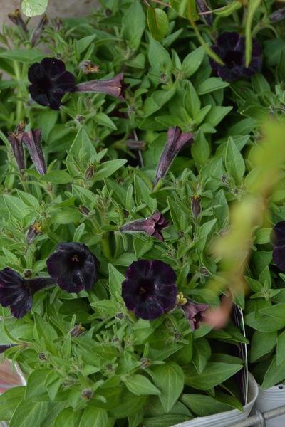 初夏のお庭の準備、少しずつ。。。_a0229658_1895266.jpg