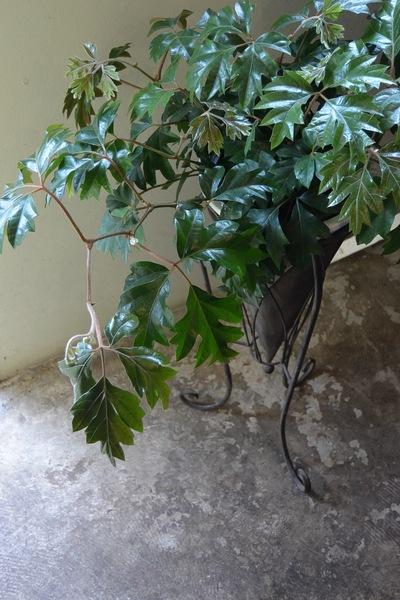初夏のお庭の準備、少しずつ。。。_a0229658_19362832.jpg