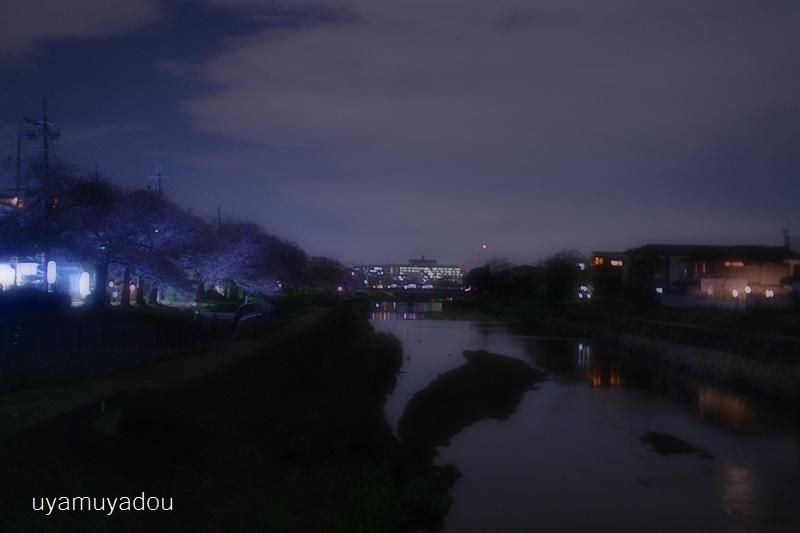 桜 昨日・今日・明日_a0157263_22381246.jpg