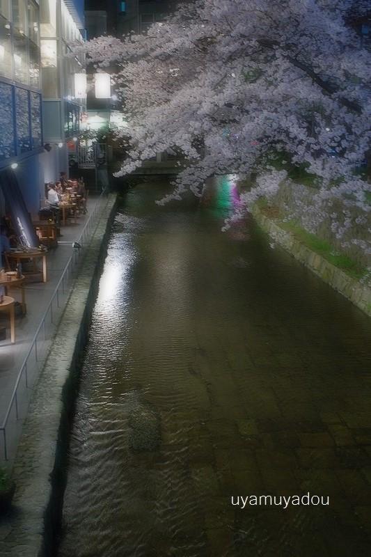 桜 昨日・今日・明日_a0157263_22450912.jpg