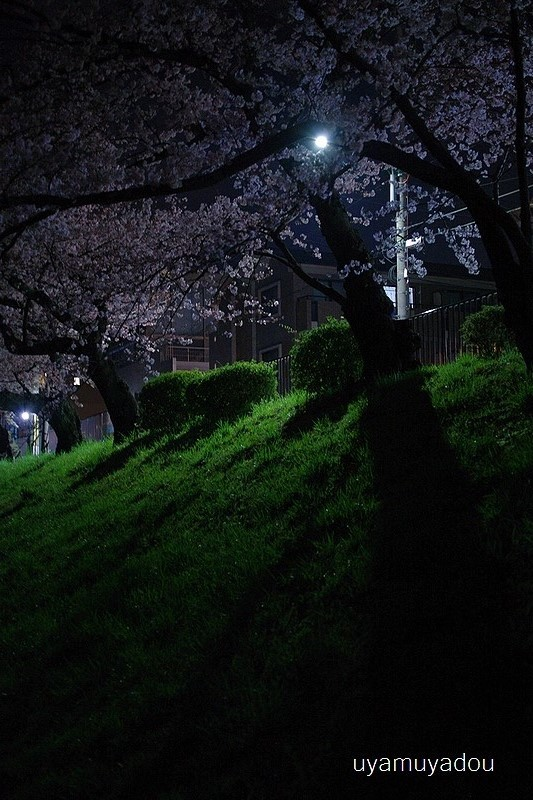桜 昨日・今日・明日_a0157263_22450953.jpg